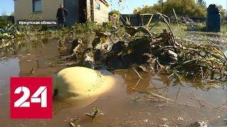 Байкал разлился после 15 лет засухи - Россия 24
