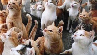Кошачий остров. Слайд-шоу к Дню кошек