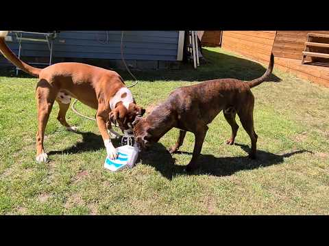 2x-fun-water-play-by-the-swedish-boxer-brothers