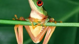 #431. Лягушки (В мире животных)