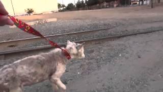 Wonderful Story Save And Rehabilitation Of Stray Dog!