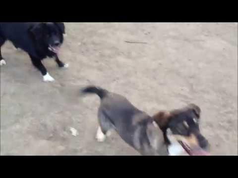 Tim & Kora I Hundeparken