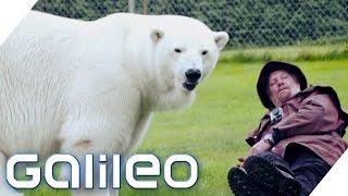 Die außergewöhnlichsten Haustierbesitzer der Welt | Galileo Lunch Break