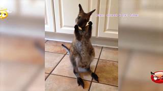 Funny  pets and animal clips complications 2020 funniest animals pets videos on youtube upto 2020