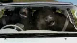 Video Toyota Hilux Bulls download MP3, 3GP, MP4, WEBM, AVI, FLV Juli 2018