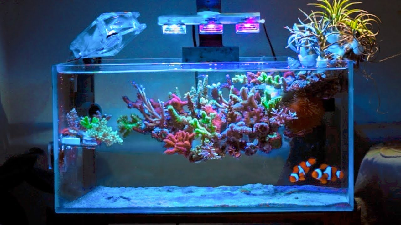 This Coral Reef is ~ Floating ~ 😮 - YouTube