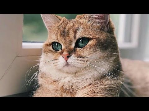 Cat videos compilation part 2 2019