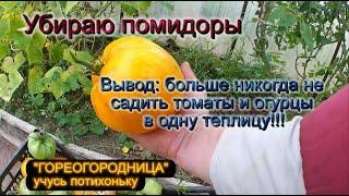 Дела огородные. Убираю томаты.