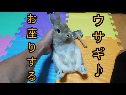 お座り?するウサギ(笑)