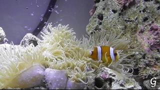 Запуск аквариума. День 1. Рыбки будут через неделю(Аквариум с живыми растениями и минимумом оборудования, без химии. Через неделю добавим рыбок. Через неделю..., 2017-02-14T20:41:49.000Z)