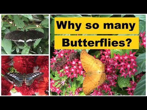 Butterflies at an airport? Changi Singapore Airport Transit Experiences.