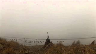 Arkansas Rice Field Hunting 2015