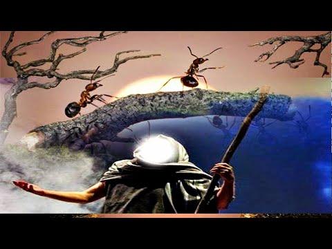 percakapan-raja-semut-dan-nabi-sulaiman-,-serta-cara-santun-dan-manusiawi-mengusir-semut-ala-nabi