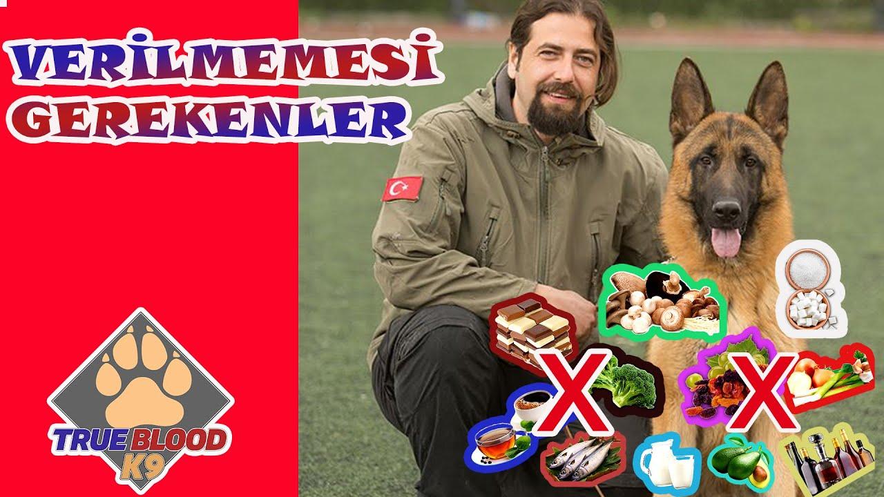 Alman Kurdu Vs Husky ( Sibirya Kurdu ) Köpekleri #almankurdu #sibiryakurdu #köpek