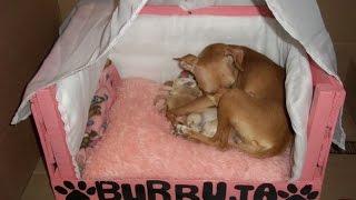 Como hacer una cama para  mascotas