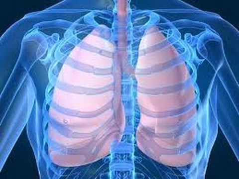 how healthy lungs work and function - youtube, Cephalic Vein