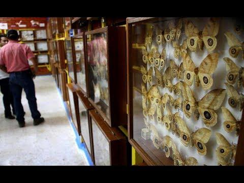Museo de Insectos, un tesoro en el CURLA - UNAH