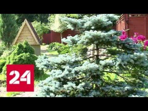 Дачникам разрешили забирать лишнюю землю - Россия 24
