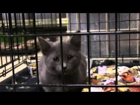 Toronto Cat Rescue Kitchener Petsmart