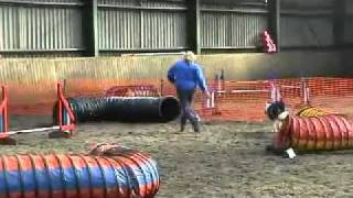 Smudge - Blind Dog Does Agility