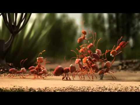 Formigas trabalhando  YouTube