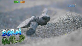 Born to be Wild: A Turtle's Journey