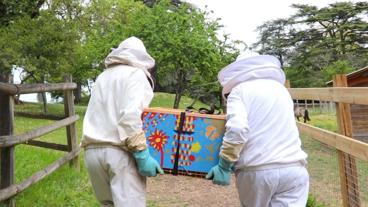 Récolte miel au petit matin au rucher des Iris