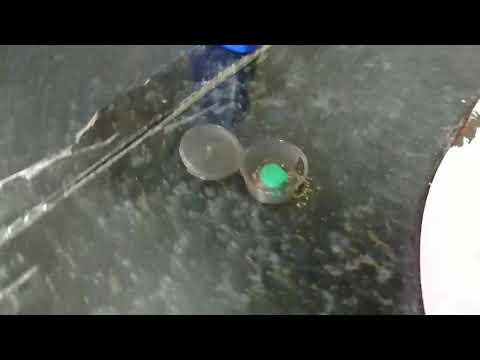 新奧除驅蟻劑 劑量強 螞蟻藥  滅蟻  除蟲  防治螞蟻 火蟻  花園 農場  超商取貨 台中面交