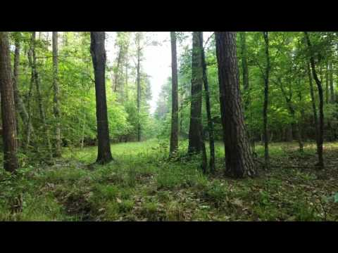Sights & Sounds of Smithland, Tx Pineywoods 4-15-17