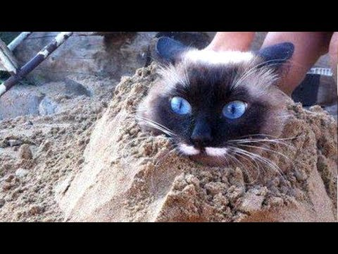 CATS Are Super HARD TRY NOT TO LAUGH CHALLENGE Funny CAT - 26 funniest wet cats pictures