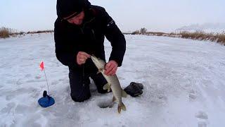 Ловля ЩУКИ на жерлицы Еле поймал живца Рыбалка на озере