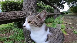 手摺の上から睨む野良猫とすぐ甘えてくる野良猫