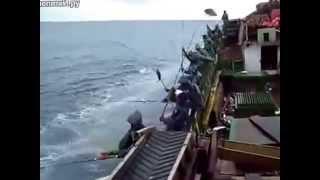 Как промысловики тунца ловят