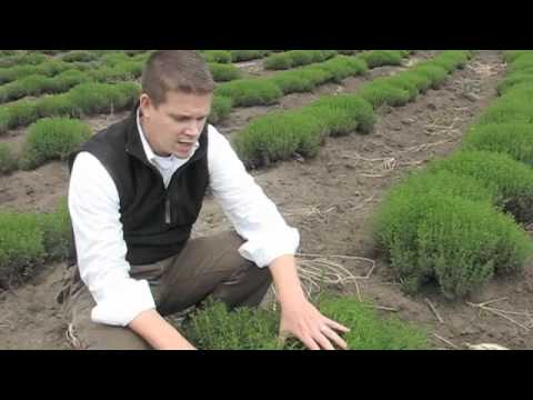 Frontier Co-op Organic Herb and Spice Sourcing in Argentina