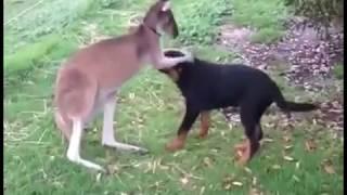 สัตว์โลกต่างสายพันธุ์ สุดแสนน่ารัก