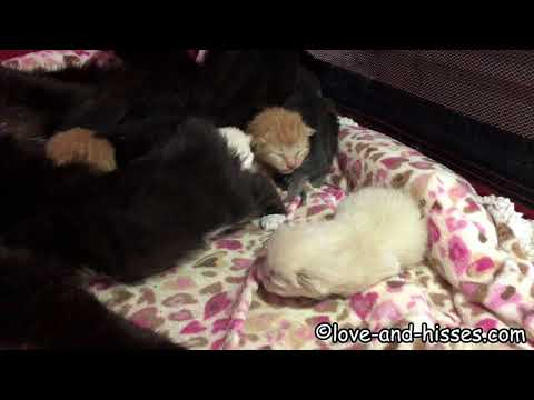 2 day old kittens, hissing