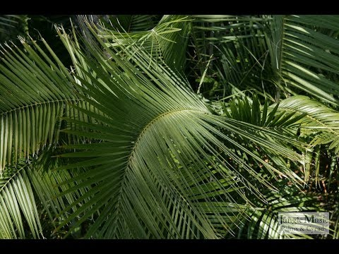 How To Care Phoenix Palm Plant | Palm Family | Urdu/Hindi
