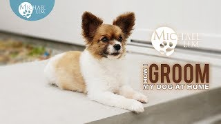 How I Groom My Dog At Home