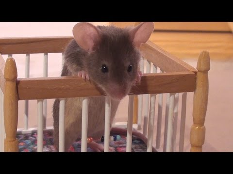 Little Mouse Nora meets the Baby Mice for the First Time