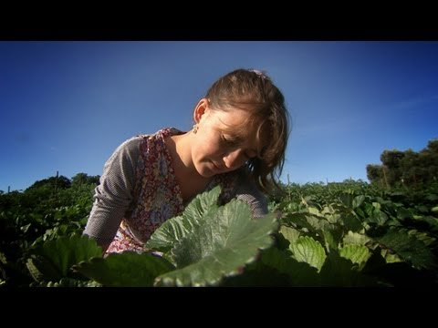 Field to Fork - 9 Billion Mouths to Feed: The Future of Farming (Ep. 2)