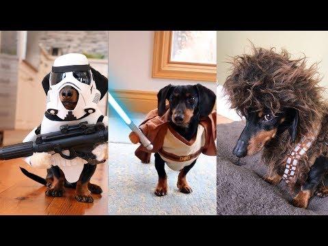Crusoe's Star Wars Dog Costumes Compilation