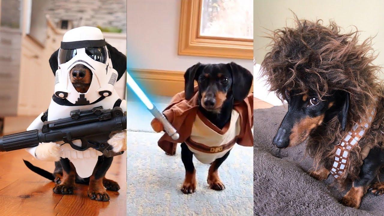 Weiner Dog Halloween Costumes.Crusoe S Star Wars Dog Costumes Compilation Youtube