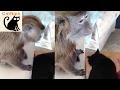 Kitty and Monkey Enjoy Bonding Time | Catnips