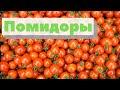 Как выращивают огурцы и помидоры   Harvesting tomatoes & cucumbers