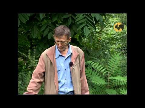 Сад и огород-100 Мята.