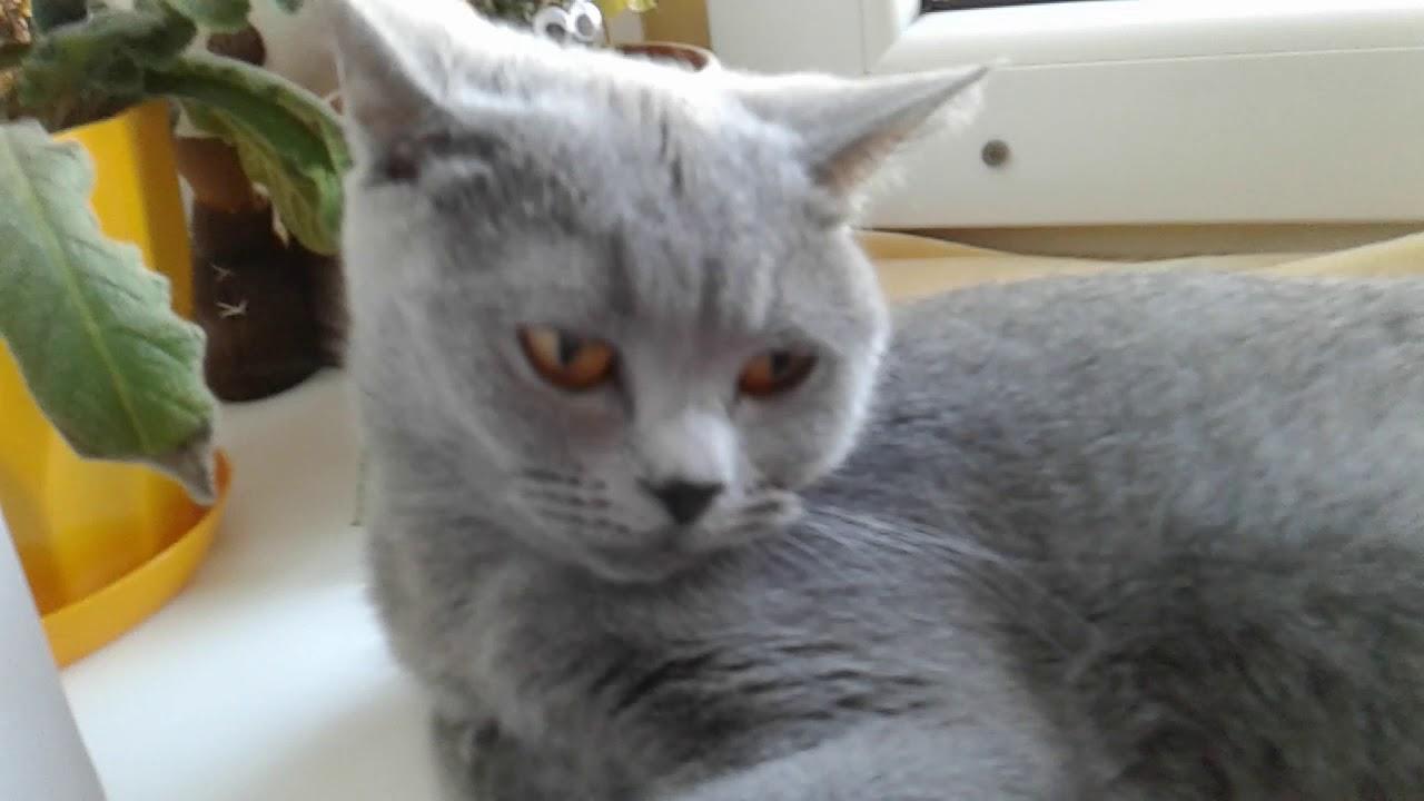 Утро канала кошка и я кот - YouTube