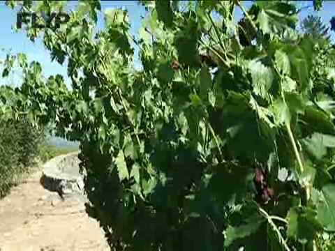 Napa Valley's Organic Farm & Winery