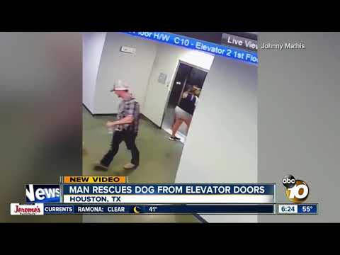 Tony Sandoval on The Breeze - WATCH: Man Saves Dog after Leash gets caught on Elevator Doors.