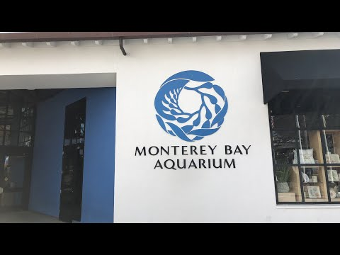 Good morning from the Monterey Bay Aquarium!