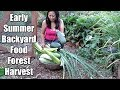 Filipina Harvests 40 lbs. Of Food In 10 Minutes From A Backyard Food Forest!
